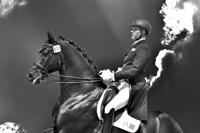 Paard- & Foto ART